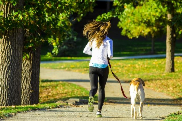 犬はみんなお散歩が好き?