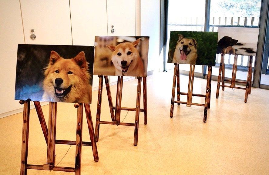 『ペットは幸せ』ゲスト:犬写真家